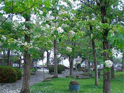 埔里‧牛耳藝術渡假村 提供