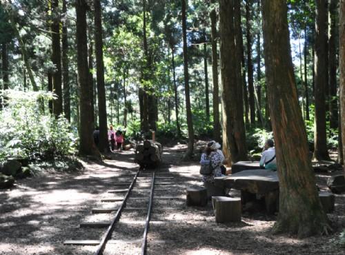 森林遊樂區(二) 東眼山探索秘境森林