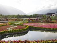 縱谷慢遊「花東花海季」寒假春節必拍花海之一