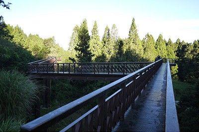 阿里山木棧道/jacky