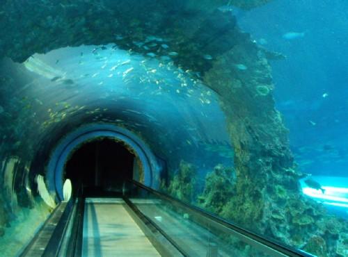 國立海洋生物博物館/Eva 隨手拍