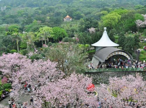 三月賞櫻季:台北最美櫻花海!天元宮粉櫻綻 淡水小鎮古蹟巡禮