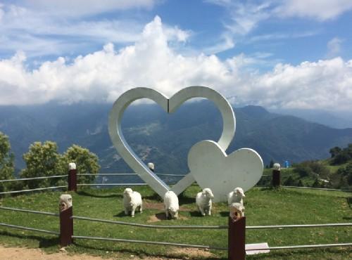 清境農場綿羊與草原/Eva隨手拍