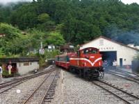 三月賞櫻季: 阿里山櫻花季啟動!懷舊鐵道之旅帶您漫步山林間