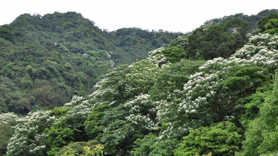 承天禪寺可眺望綻放滿山頭的油桐花 / Eva隨手拍 提供