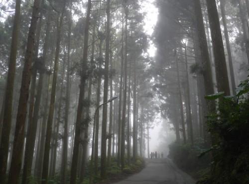 「林」來瘋了沒:蓊鬱迷蹤 溪頭自然教育園區尋楓蹤