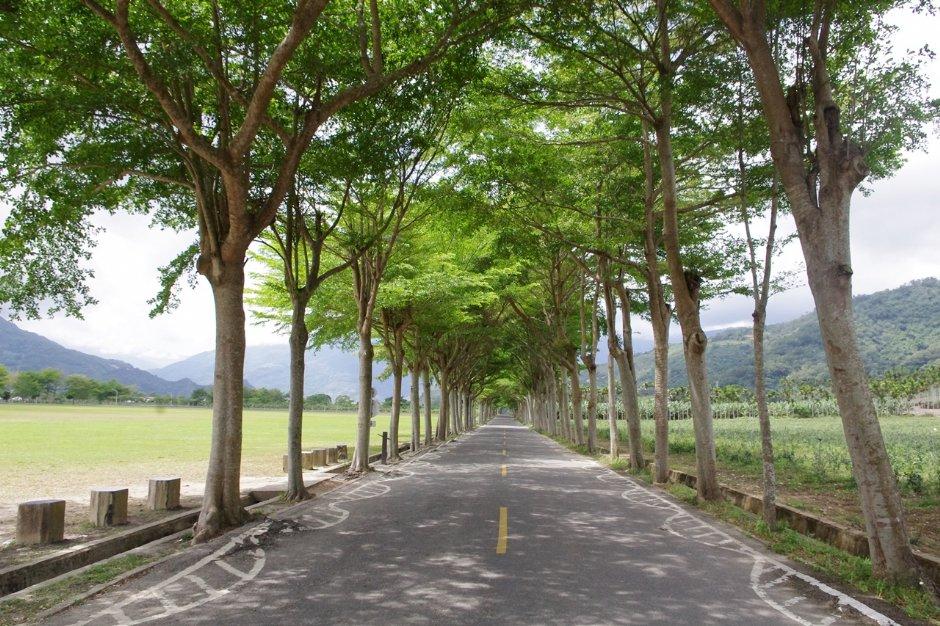 騎乘在龍田自行車道享受美好旅遊時光 / Eva隨手拍