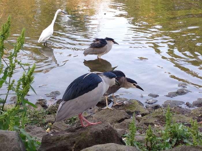 大安森林公園占地寬廣是台北親子賞鳥的絕佳去處 ©陳皮梅