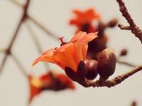 春夏白河赏花轻旅行-莲花、木棉花 夹道欢迎你