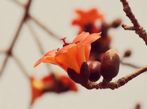 春夏白河賞花輕旅行-蓮花、木棉花 夾道歡迎你