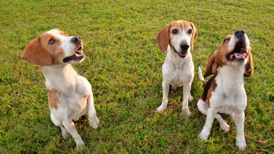 只要有大草坪,就是狗狗們開心奔跑的時候/陳皮梅 提供