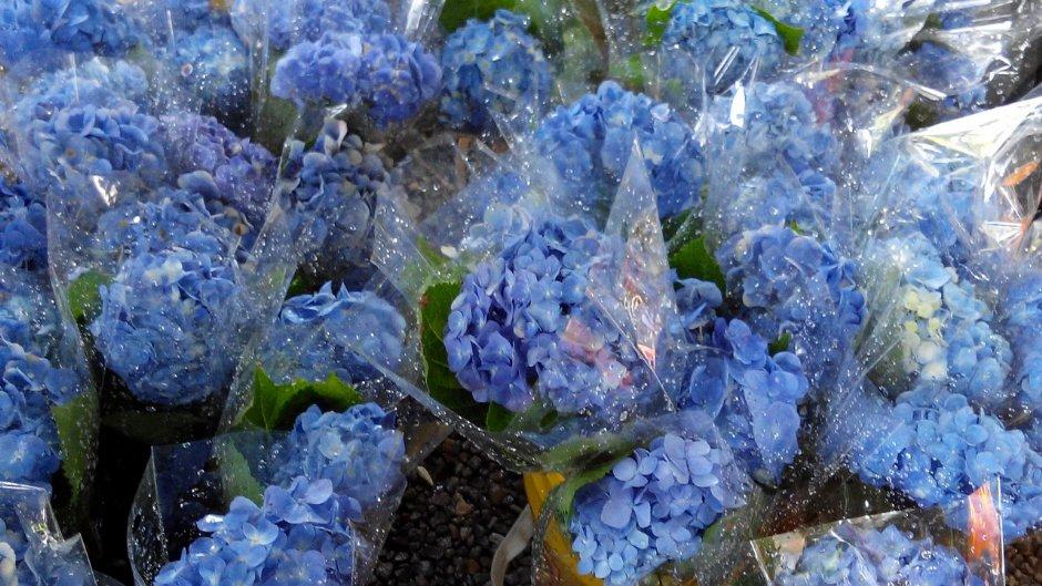 農場也販賣繡球花束讓遊客購買/Lu