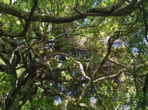 巨大的白榕氣根蔓延宛如會走路的樹/Lu